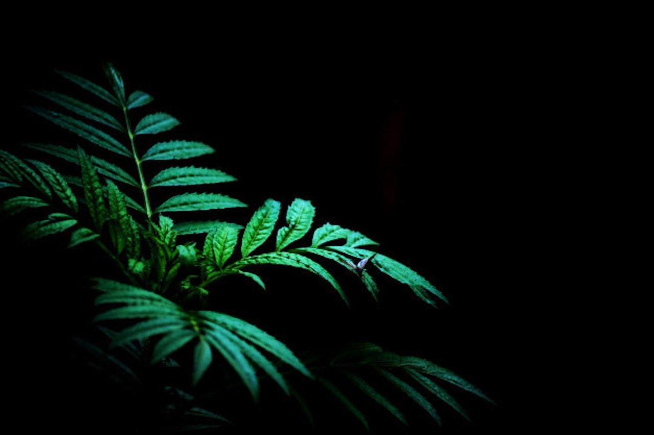 green-plant-dark-background-wild_55536-12 [no text]
