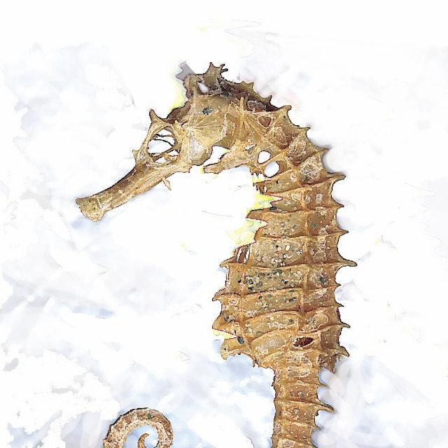 IrisB_Seahorse-on-silver_skypec